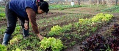 Abren registro para recibir las semillas del Prohuerta