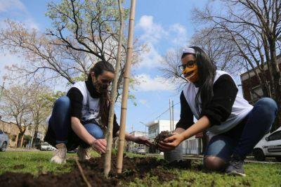 Plantan mil ejemplares y se afianza la centenaria historia del Jacarandá en la ciudad