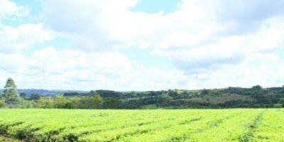 Continúa vigente la resolución de protocolo sanitario para la actividad agroindustrial