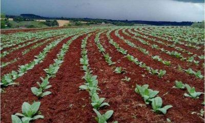 Una tabacalera se prepara para comenzar a producir en San Luis en 2021