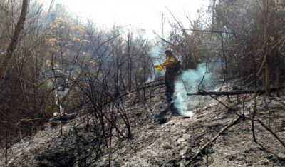 Los incendios forestales ya afectaron a más de 7.700 hectáreas en las Yungas