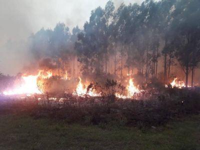 No se registran focos de incendio en la provincia