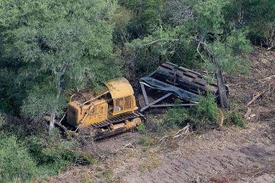 Elevan requerimientos para desmontes menores a 300 hectáreas y adecuan los requisitos para Planes de Manejo de Bosques a lo indicado en la Ley de Bosques