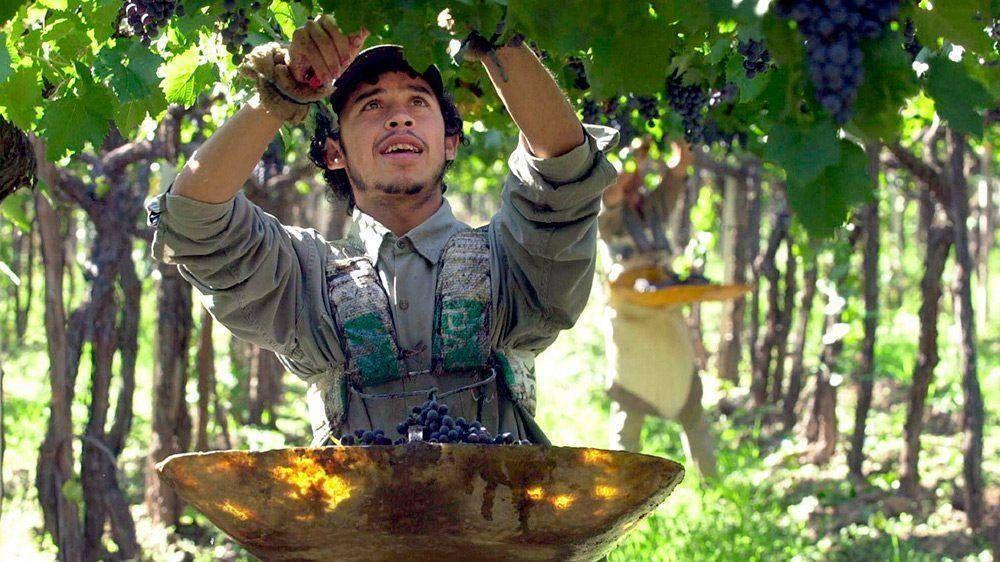 Ante la ausencia de trabajadores golondrina, Mendoza busca reconvertir 10 mil desocupados para emplearlos en viñas
