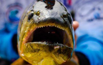 Pesca en Corrientes: desestiman la posibilidad de aplicar una veda total en el río Paraná