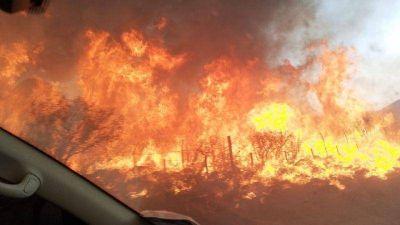 El fuego arrasa con monte nativo y palmeras en Salsacate