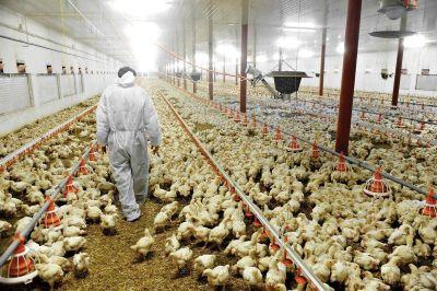Gremio rural detectó trabajo informal en granjas avícolas