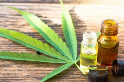 Mendoza, a un paso de aprobar la producción y venta del cannabis medicinal