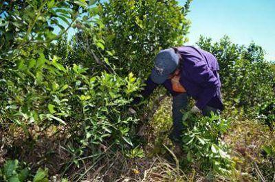 Se inicia un ciclo de capacitaciones para trabajadores yerbateros en Corrientes