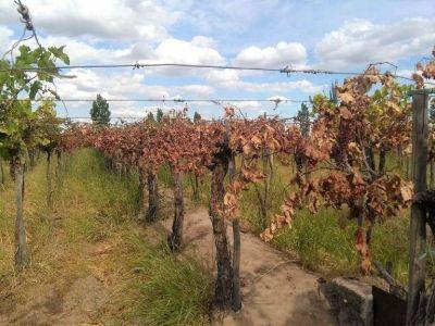 Menos producción por la sequía