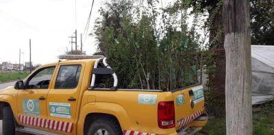 Merlo: entregan árboles para que los vecinos los planten en el frente de sus casas