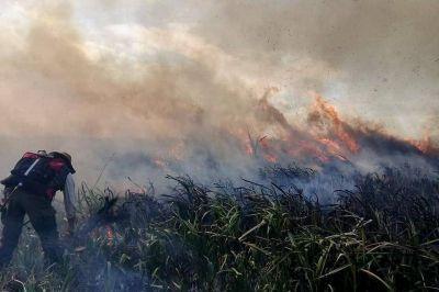 Ley sobre incendios: el posible impacto ambiental