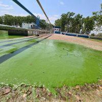 Las algas permanecen en la costa de la Región y piden extremar el cuidado del agua