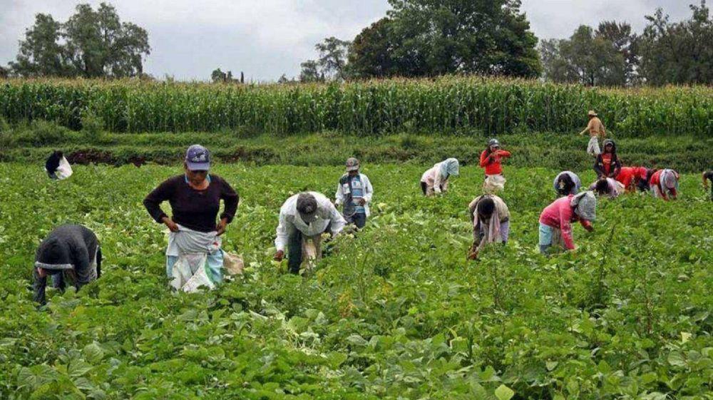 Con 500 mil empleados en negro, lanzan un Plan Nacional de registración para empleadores y peones rurales
