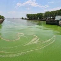 """Advierten que las cianobacterias en el río pueden durar """"mucho tiempo"""""""