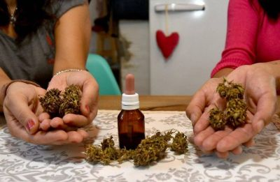 Cannabis medicinal: Mar del Plata une esfuerzos para satisfacer la demanda