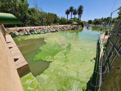 Por las cianobacterias en el río de la Plata recomiendan no consumir agua de red