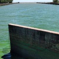 Toxinas en el agua: desde el Municipio informaron que está trabajando sobre el tema