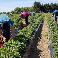 RENATRE detectó 35 trabajadores rurales con indicios de explotación laboral en Santiago del Estero