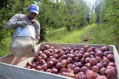 ¿Por qué los buenos precios de las frutas no llegan a los productores?