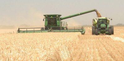 Avanza la cosecha de trigo y se confirma una caída de más del 10%