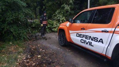 Caída de árboles y cortes de electricidad por el fuente viento