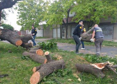 La Plata: avanza el operativo de asistencia tras el temporal de viento en la ciudad