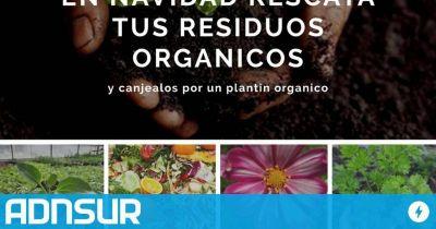 Campaña ecológica navideña: cambian tus residuos orgánicos por un plantín