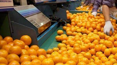 La exportación de jugo de naranja es la más alta en 11 años