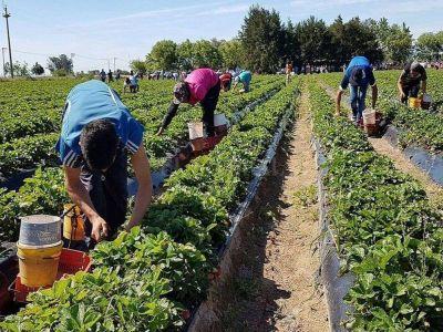 UATRE logró que se le otorgue el bono de fin de año para los trabajadores rurales