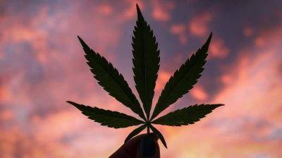 Agencia Provincial de Cannabis: El proyecto que acompañará el HCD en Necochea