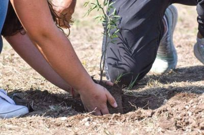 El programa Forestando Córdoba plantó más de 65 mil árboles en 2020