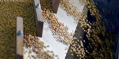 El precio de la soja tocó los US$ 500 y las exportaciones argentinas podrían superar los 21.000 millones de dólares