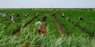Detectan explotación laboral en una productora de frutos rojos, en Tandil y Sierras de los Padres