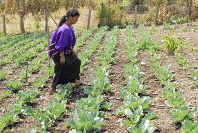 PepsiCo y el BID firman alianza para beneficiar a agricultoras