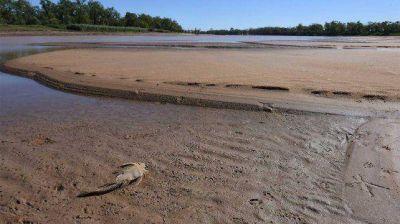 Medio ambiente: proteger y vigilar los humedales, esa es la cuestión en el Delta del Paraná