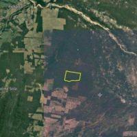 Salta: Audiencia para desmontar casi seis mil hectáreas de selva