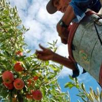 Trabajadores de la fruta en Río Negro acordaron aumento global del 40,5 por ciento
