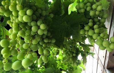 Uruguay: Vinos Rosés, veneno en su mesa