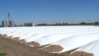 Dólares del campo: el BCRA prepara una medida para agilizar la liquidación de granos