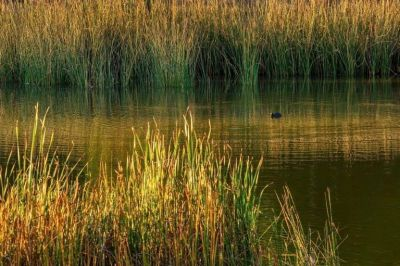 Garro quiere reglamentar los límites de los humedales de la zona sur de La Plata