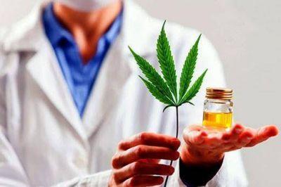 El INTA Pergamino y una empresa privada comenzarán a producir cannabis medicinal