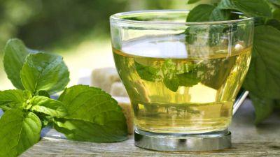 Té verde: todas las propiedades, beneficios y mitos del elixir antioxidante