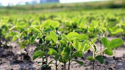Más de 40.000 pequeños productores de soja ya reciben reintegros de retenciones