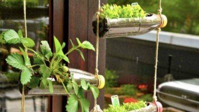 Vegetales que podrás cultivar en botellas plásticas