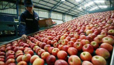 Se incrementaron las exportaciones de manzanas y peras en 2020