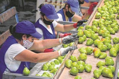 Avanza la cosecha de fruta con un protocolo a medias