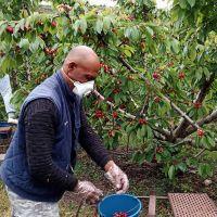 Preocupación por el «duro papel» de los empleadores de la fruta