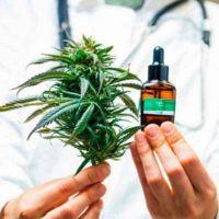 Mendoza es pionera en reglamentar el cultivo de cannabis para uso medicinal