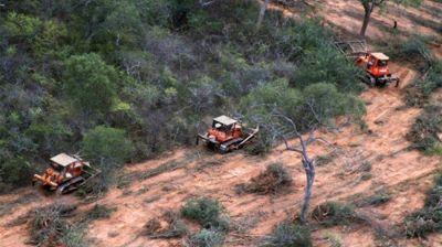 """""""En 70 años nos quedaremos sin bosques nativos"""", dijo el ministro Juan Cabandié"""